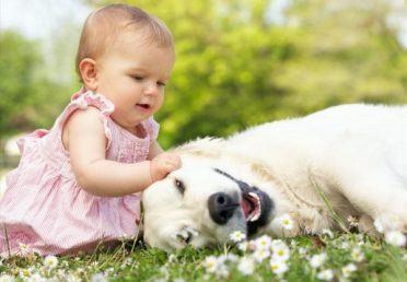Dạy trẻ biết yêu thương động vật